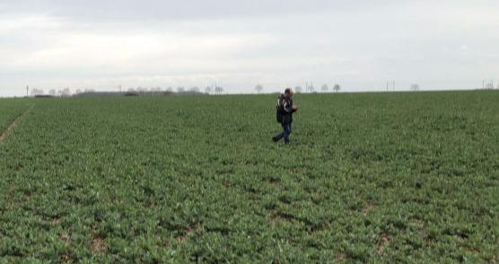 colza-tour-plaine-parcelle-champ-carence-soufre-bore-phosphore-biomasse-entre-sortie-hiver