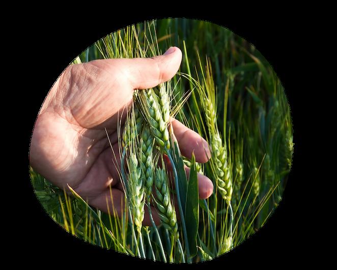 Saisie-des-observations-agriculteur-ble