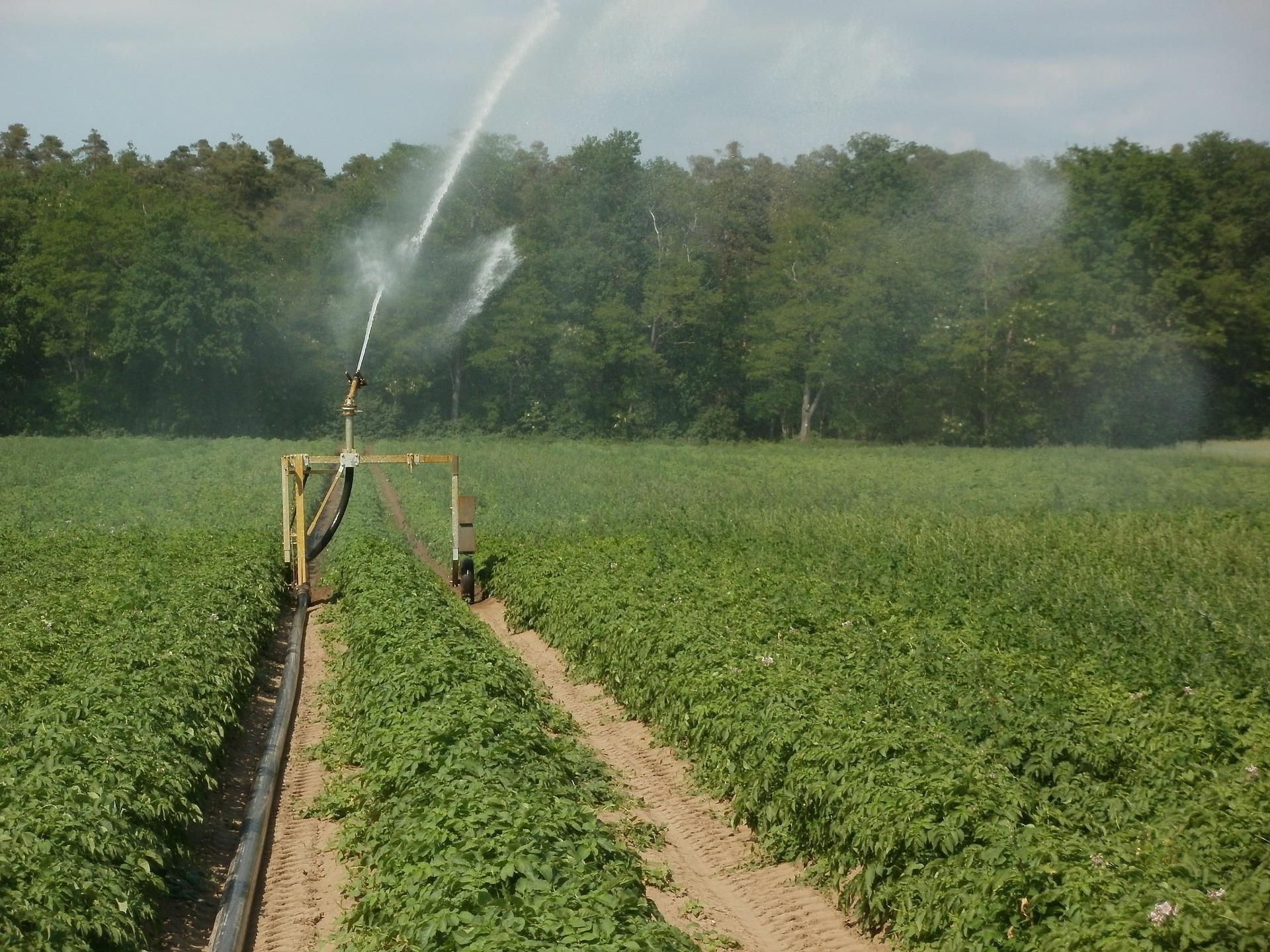irrigation pommes de terre